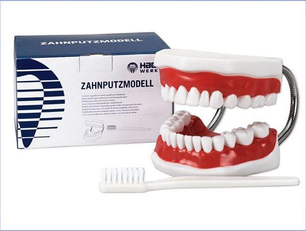 Zahnputzmodell Maxi Modell mit Bürste, extra groß